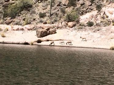 Click image for larger version.  Name:bighorn 2015.jpg Views:48 Size:27.3 KB ID:715985